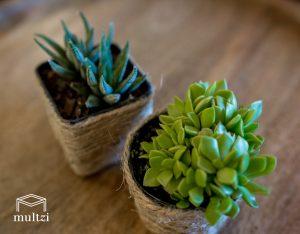 tiny-succulent-plants